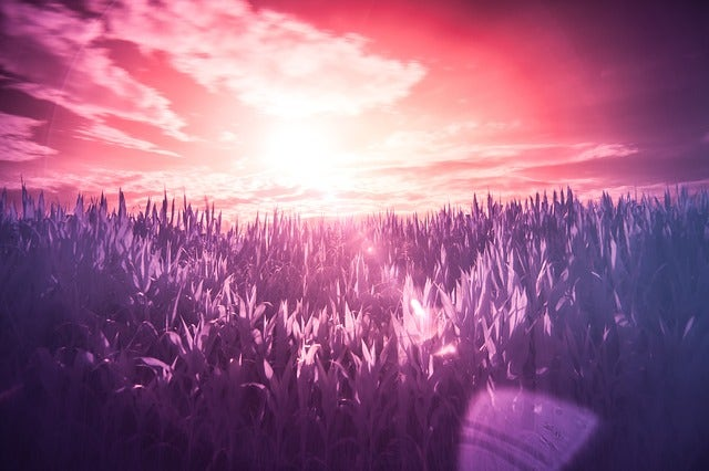 Sunset captured using an infrared filter