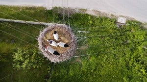 birds nest on wires aerial image