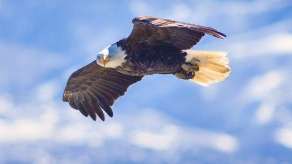 eagle in sky on photofocus blog