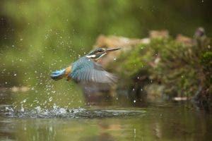 bird in the wild