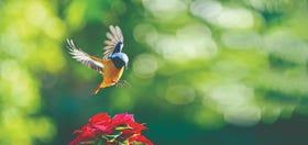 Bird Photography with Nikon